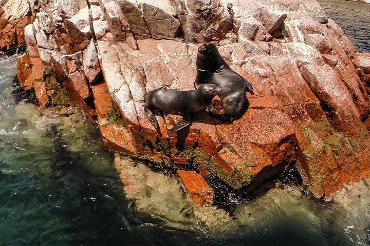 Ballestas Islands: Paracas National Reserve from Lima Small Group Tour, Lima, PERU