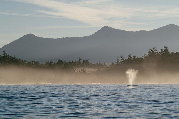 6 Hour Ocean Adventure, Isla de Vancouver, CANADA