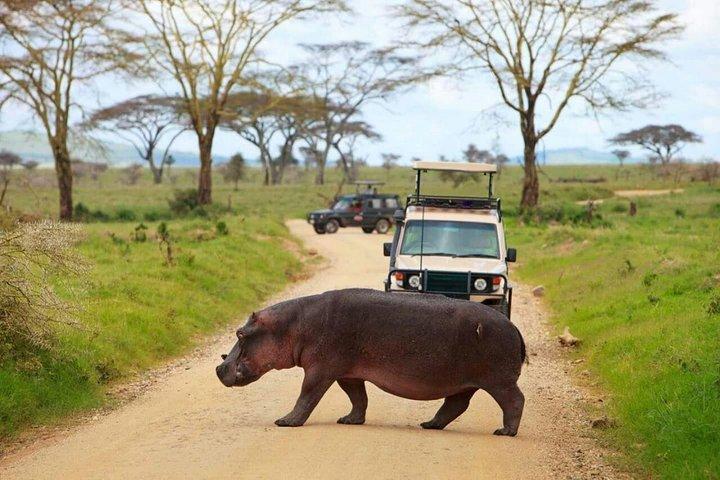 The Admirable Mikumi National Park - 2 Days, Dar es Salaam, Tanzânia