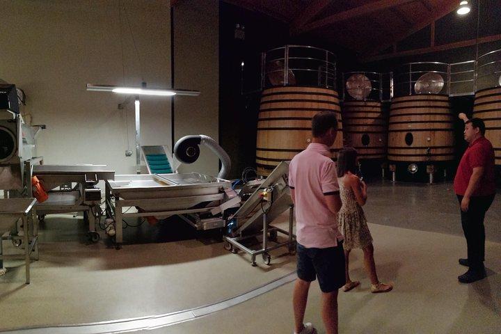 Visit a winery in Rioja, San Sebastian, ESPAÑA