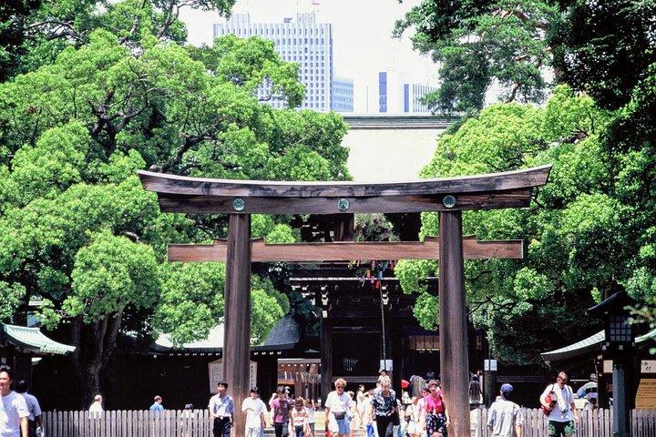 Half Day Sightseeing Tour in Tokyo, Tokyo, JAPON