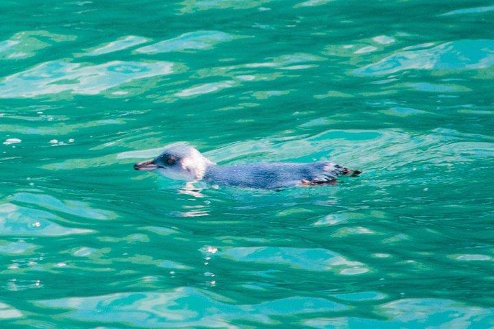 Akaroa Harbour Nature Cruise with Dolphin Watching, Akaroa, NUEVA ZELANDIA