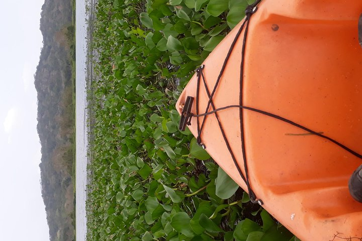 Private Kayaking tour in the Chagres River, Gamboa, PANAMA