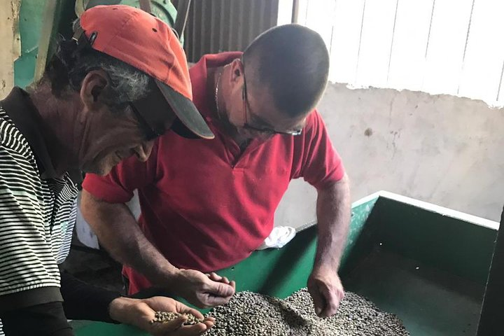 Ticoffia Coffee Tour-Sustainable Farming, ,
