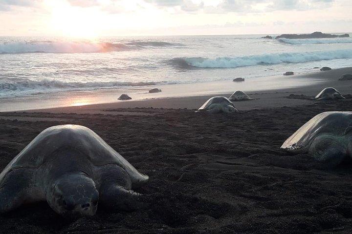 turtle tour, Tamarindo, COSTA RICA