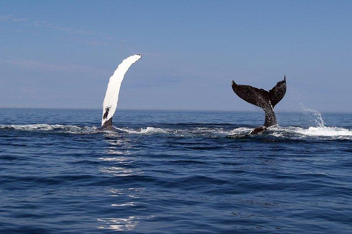 Busselton Whale Watching Eco Tours, Busselton, AUSTRALIA