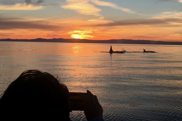 Victoria Whale -Watching Tour and Wine Tour, Isla de Vancouver, CANADA
