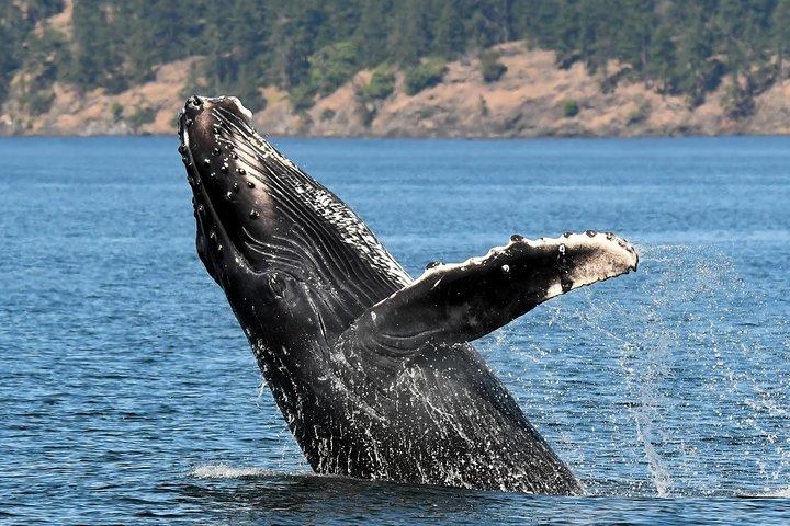Victoria Marine Wildlife Tour, Isla de Vancouver, CANADA