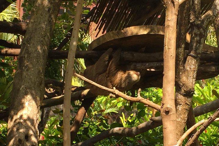 Beach-mountain & Sloth Refuge Buggy Tour, ,