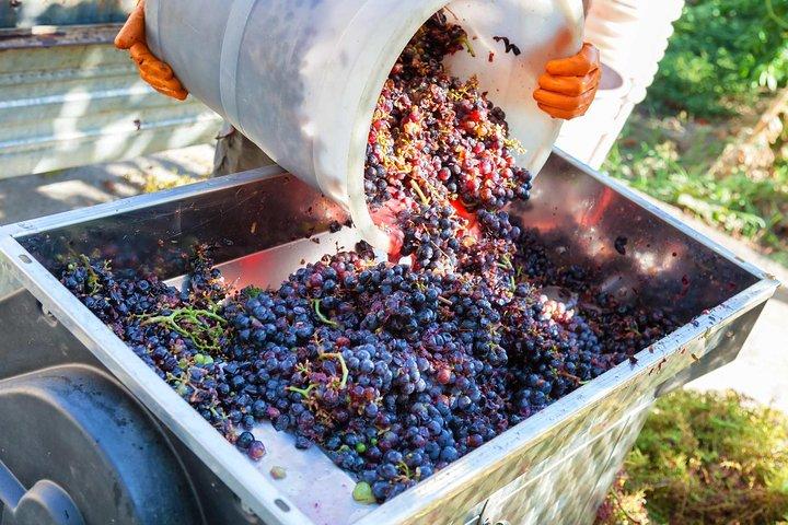 Half-day Wine Tour in the Tuscan's Hills from Pisa, Pisa, ITALIA