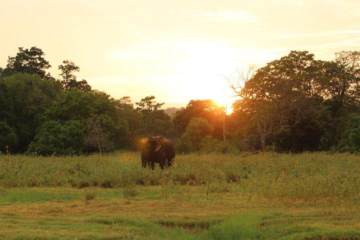 Polonnaruwa Kingdom and Wild Elephant Safari from Kandy, Kandy, Sri Lanka