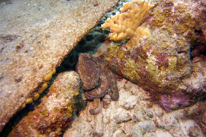Certified Scuba Diving in Curacao, Curazao, BRASIL