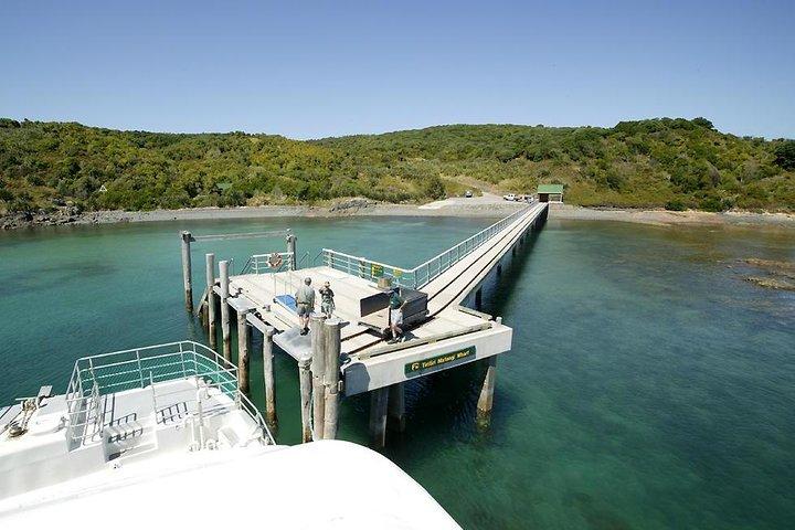 Tiritiri Matangi Island Day Trip from Auckland with Optional Guided Walk, Auckland, New Zealand