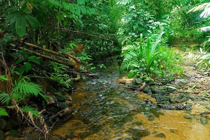 Khao Lak Jungle Experience, ,