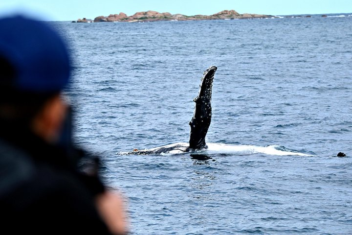 Whale-Watching Tour from Augusta or Perth with Optional Captain's Lounge Upgrade, Perth, AUSTRALIA