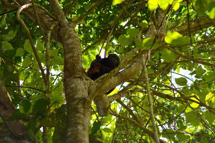 Escapada de un día: Bosques, finca de cacao y tradiciones (salida desde Guayaquil), Guayaquil, ECUADOR