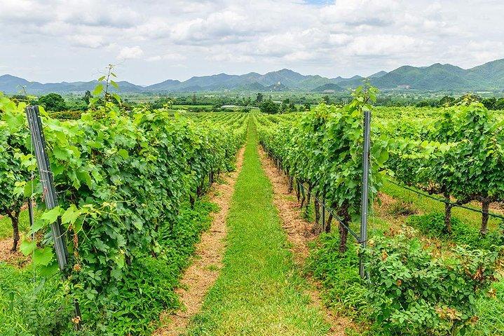 Hua Hin Discovery and Vineyard, Hua Hin, Tailândia