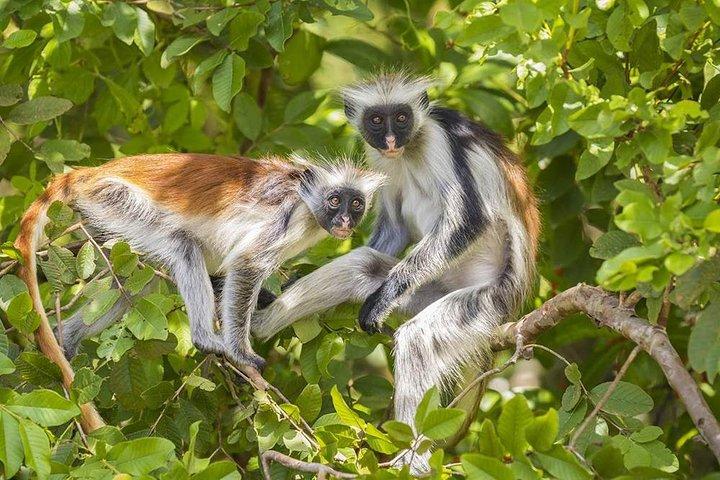 Jozani National Park, ,