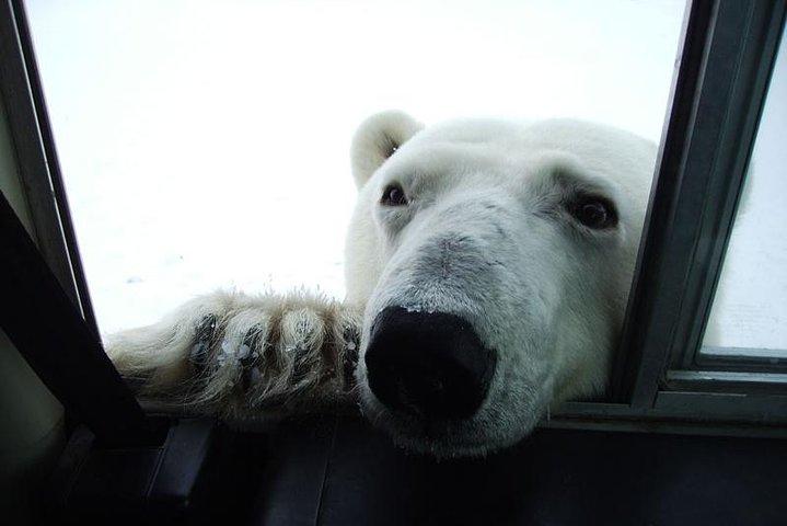 5 nights Churchill, Polar Bears & Northern Lights adventure from Winnipeg, Churchill, CANADA