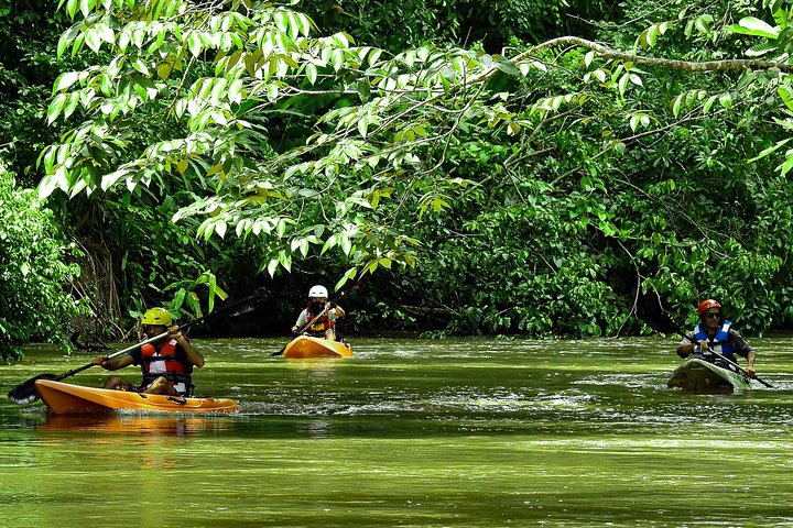 Corcovado River Kayaking And Mangrove Estuary Bird-watching, Puerto Jimenez, COSTA RICA