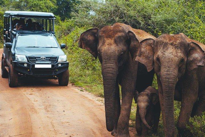 Leopard Safari Tour in Yala National Park, Parque Nacional Yala, SRI LANKA