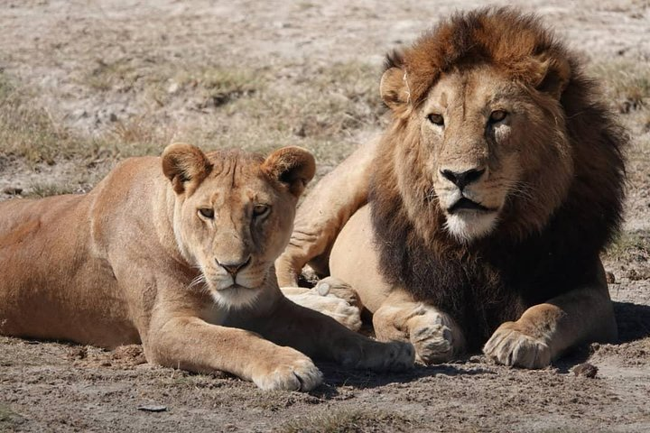 Tarangire National Park: Guided Day Tour from Arusha, Arusha, Tanzania