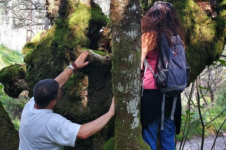 Baños del Bosque - Shinrin Yoku Terapeutico ,en bosques sagrados celtas, ,