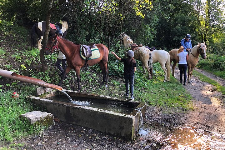 Horseback Riding Tour In Brasov - Ride Horses Through Fields, Forests And Hills, Brasov, RUMANIA