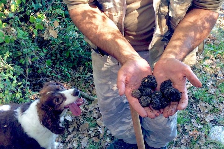 The Real Truffle Hunting in Abruzzo, Ascoli Piceno, Itália