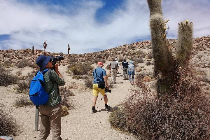 Excursión de 2 días al Algarrobal, Los Colorados y La Poma desde Cachi, Cachi, ARGENTINA