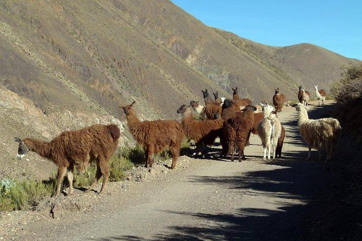 Descubre la Ruta 40 en Salta, Cachi, ARGENTINA