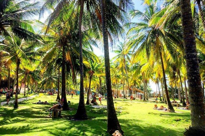 Combo Jhony cay, Acuario, Bahia, Manglares y mantarrayas., San Andres, COLOMBIA