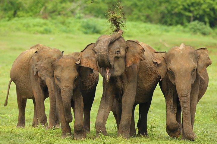 Udawalawe National Park Half Day Game Drive, Parque Nacional Yala, SRI LANKA