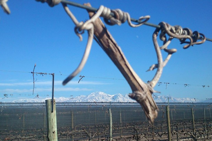 One Day Grapes on the Edge. Uco Valley Wine Tour, Mendoza, ARGENTINA