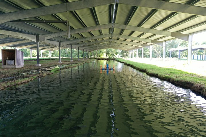 English Tour into the Sturgeon Farm With a Culinary Universe in Neuvic, Bergerac, FRANCIA