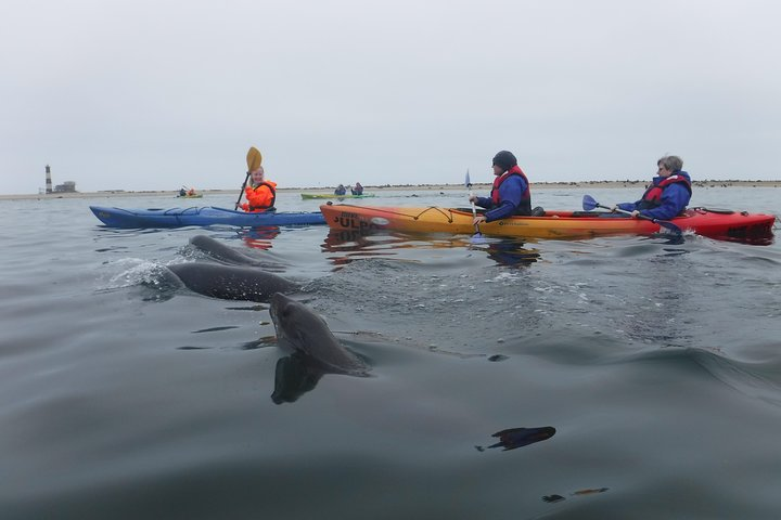 Pelican Point Kayaking Half-Day Tour, Walvis Bay, Namibia