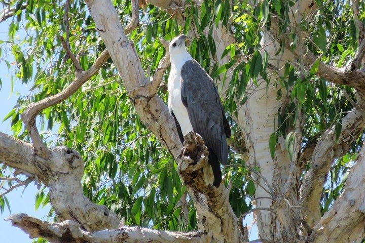 Darwin to Kakadu Day Trip by Air Including Yellow Water Cruise, Darwin, AUSTRALIA