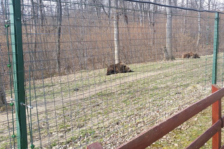 Small-Group Libearty-Liberty Bear Sanctuary Zarnesti Trip from Brasov, Brasov, RUMANIA