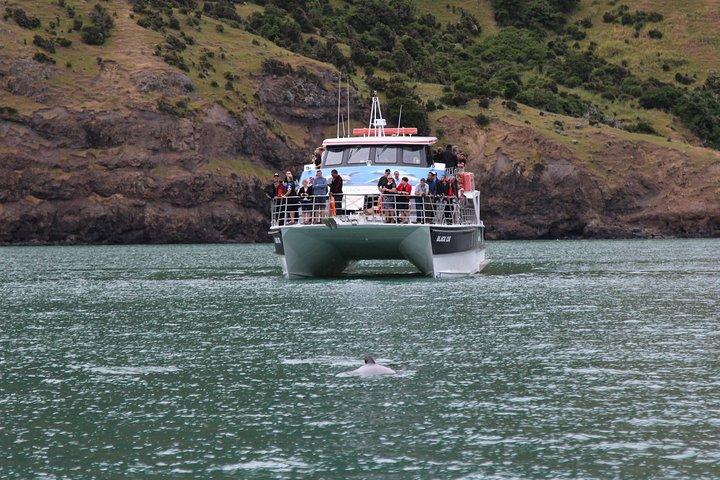 Akaroa Shore Excursion: Akaroa Harbour Nature Cruise, Akaroa, NUEVA ZELANDIA