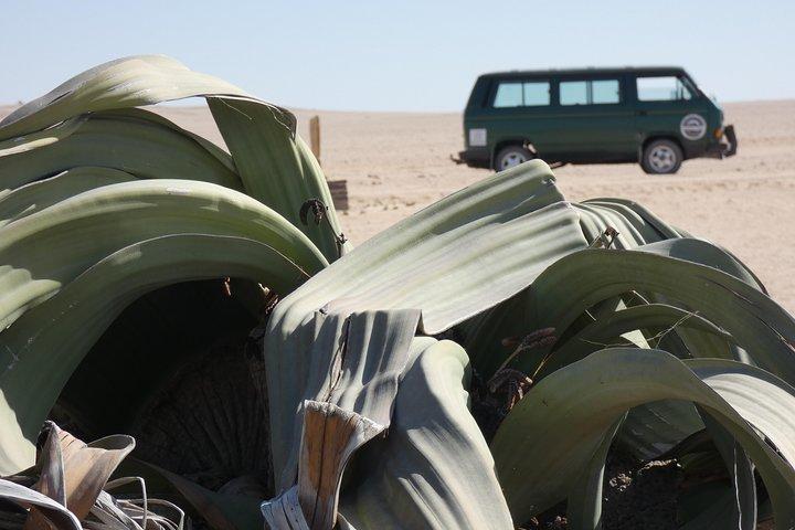 Walwitschia Plan Moonlandscape &Namib Desert Explorer Day Tour, Swakopmund, NAMIBIA