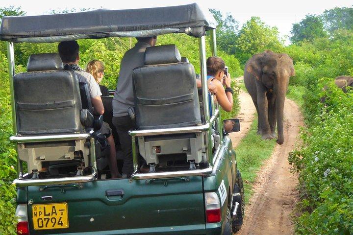 Safari at Udawalawe National Park, Parque Nacional Yala, Sri Lanka