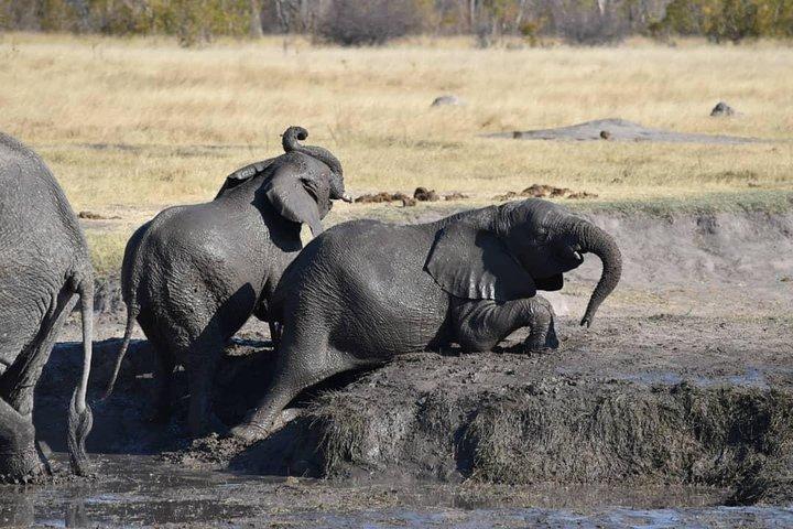 Chobe Full Day Safari (including transfers from Livingstone, Zambia to Botswana), Livingstone, Zimbábue