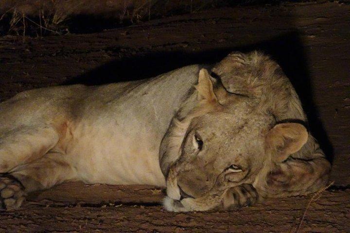 7 Days Kafue National Park, Livingstone, ZIMBABUE