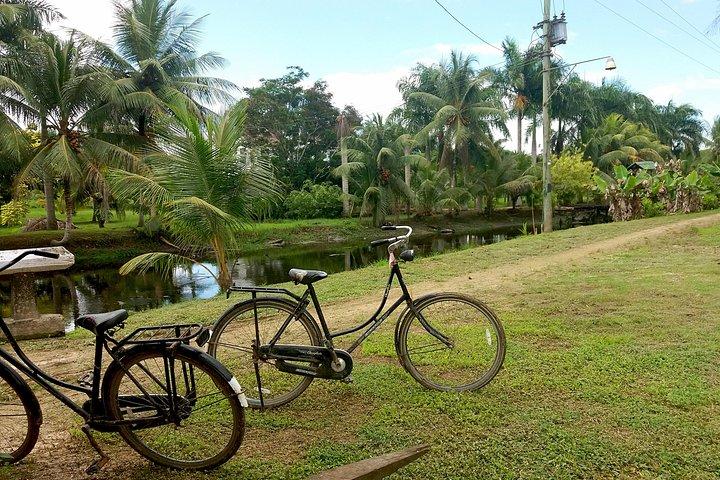 'Plantaadje' Wetland Bicycle Tour, Paramaribo, SURINAM