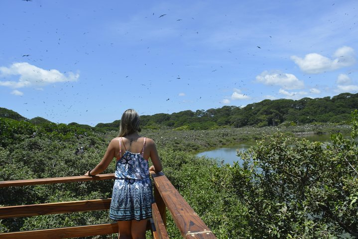 Day Trip: Mangrove, Dolphins & Birds. (Departure from Guayaquil), Guayaquil, Equador