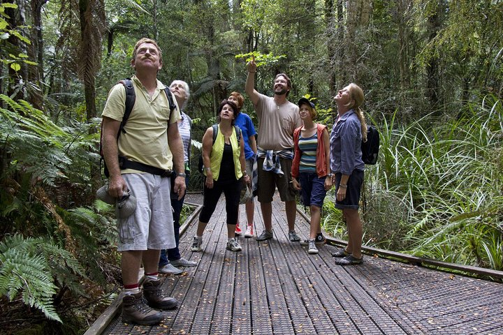 Bay of Islands Shore Excursion: Puketi Rainforest Guided Walk, Bahia de Islas, NUEVA ZELANDIA