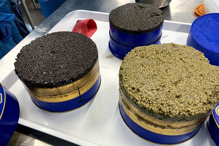 English Tour Sturgeon Farm Visit with Caviar-Making Workshop in Neuvic, Bergerac, França