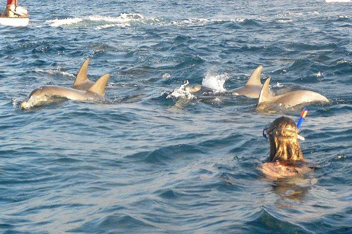 Josani Forest & Dolphin Tour Snorkeling Sea trip Hals Day - Zanzibar, Dar es Salaam, TANZANIA