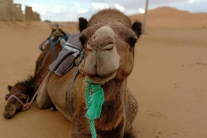 Small Group 3-Days Fez to Marrakech Desert Tour, Fez, MARRUECOS