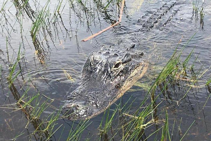 Everglades Airboat Safari, Miami, FL, UNITED STATES